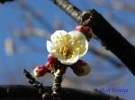 神代植物公園の2月の花_1