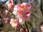 神代植物公園の2月の花_2