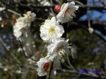 神代植物公園の2月の花_3