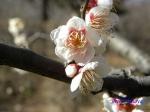 神代植物公園の2月の花_4