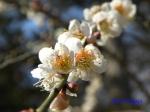 神代植物公園の2月の花_6