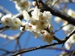 神代植物公園の2月の花_9
