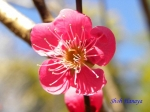 神代植物公園の2月の花_10