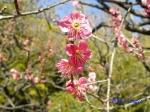 神代植物公園の2月の花_12