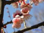 神代植物公園の2月の花_14