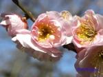 神代植物公園の2月の花_15