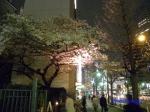 西新宿常圓寺の桜_1