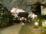 西新宿常圓寺の桜_3