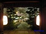 西新宿常圓寺の桜_7
