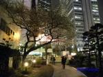 西新宿常圓寺の桜_8