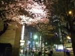 西新宿常圓寺の桜_10
