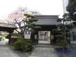 西新宿常圓寺の桜_12
