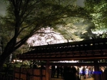 六義園のしだれ桜ライトアップ_4