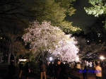六義園のしだれ桜ライトアップ_5