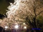 六義園のしだれ桜ライトアップ_13