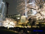 毛利庭園の桜ライトアップ_2