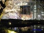毛利庭園の桜ライトアップ_7