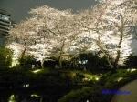 毛利庭園の桜ライトアップ_11
