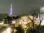毛利庭園の桜ライトアップ_15