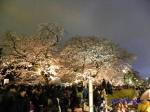 千鳥ヶ淵緑道の桜ライトアップ_2