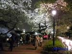 千鳥ヶ淵緑道の桜ライトアップ_5