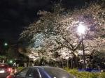 千鳥ヶ淵緑道の桜ライトアップ_14