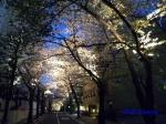 六本木アークヒルズの桜ライトアップ_07