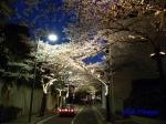 六本木アークヒルズの桜ライトアップ_08