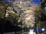 六本木アークヒルズの桜ライトアップ_09