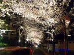 六本木アークヒルズの桜ライトアップ_12