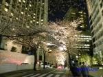 六本木アークヒルズの桜ライトアップ_13
