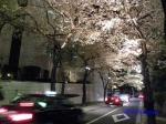 六本木アークヒルズの桜ライトアップ_14
