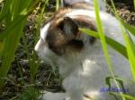 小石川植物園の花菖蒲その2_15_花菖蒲のそばでくつろぐ猫