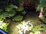 夢の島熱帯植物館_13_