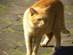 日比谷公園の秋バラを警備するネコさん5