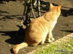 日比谷公園の秋バラを警備するネコさん6