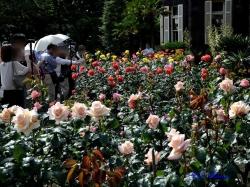 洋館側の、南西方向のバラ園に面した花壇