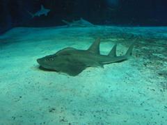 サメ専用の水槽