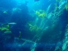 トドグリの水中遺跡らしき石段