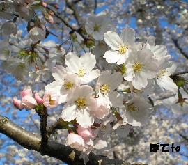 熊谷桜堤f