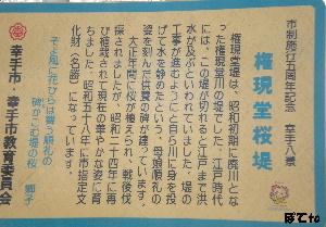 権現堂桜堤7
