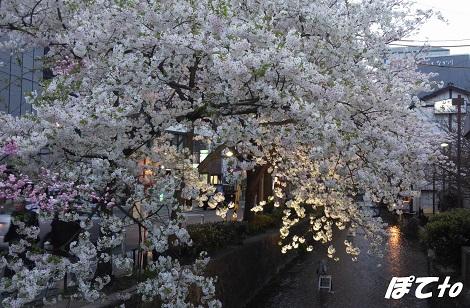 2013桜c