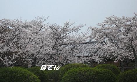 嵐山2013