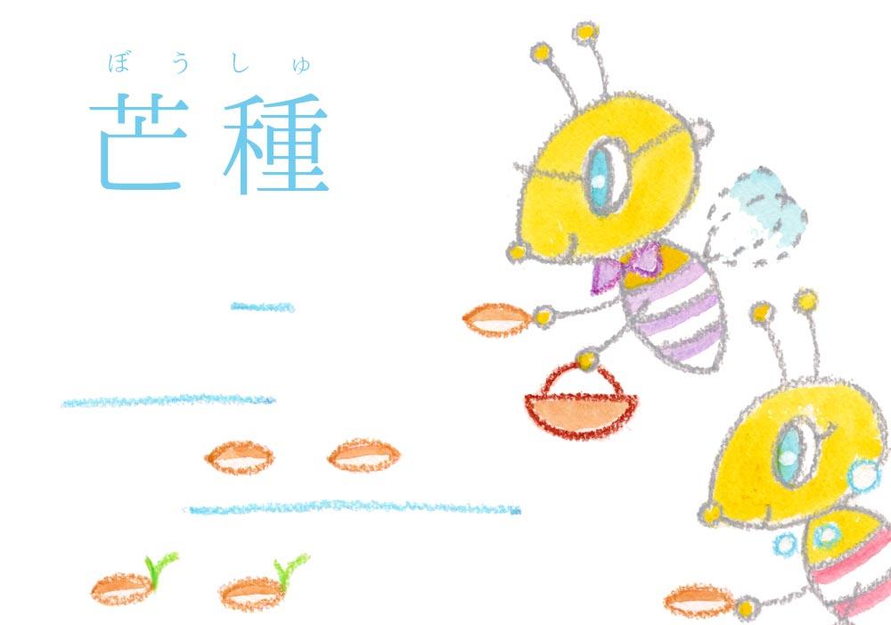 芒種(ぼうしゅ)