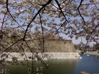 大阪城花見