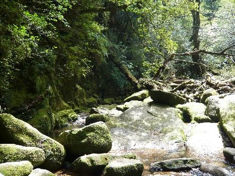 原生林コース