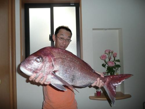 コッチー 真鯛 72cm