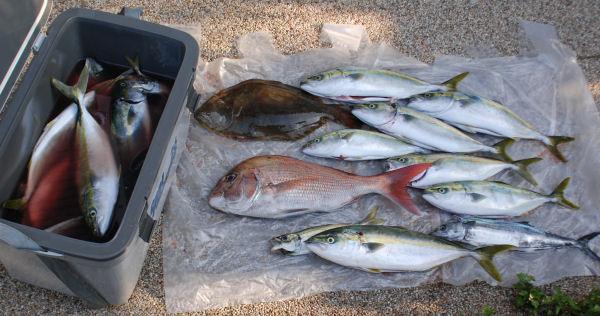 釣果の一部