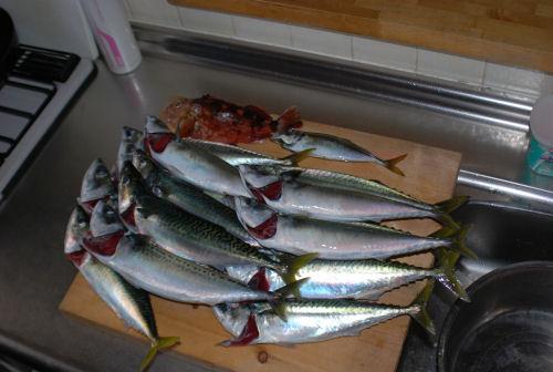 釣行会の釣果