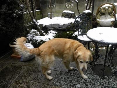 雪遊びする前に雪解けてしまったね^^;